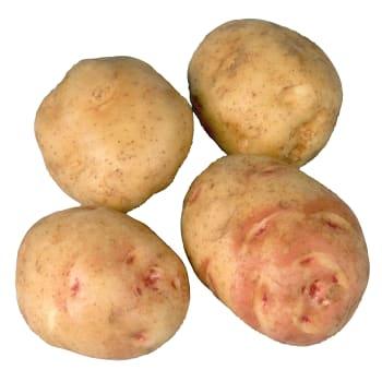 Potatis Mjölig Lösvikt