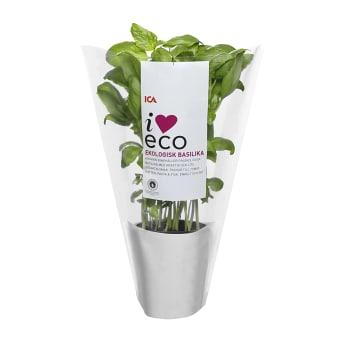 Basilika Ekologisk 1-p KRAV ICA I love eco