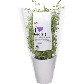 Timjan i kruka Ekologisk 1-p KRAV ICA I love eco