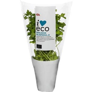 Bladpersilja Ekologisk 1-p KRAV Klass 1 ICA I love eco