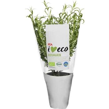 Rosmarin Ekologisk 1-p KRAV ICA I love eco