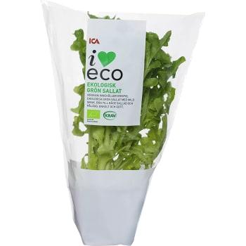 Grön kruksallat Ekologisk 1-p KRAV Klass 1 ICA I love eco