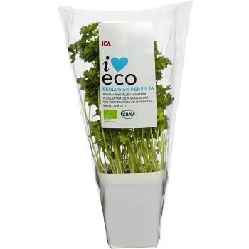 Persilja i kruka Ekologisk 1-p KRAV Klass 1 ICA I love eco