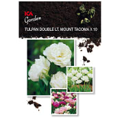 Tulpan Double Lt. Mount Tacoma x10 ICA Garden