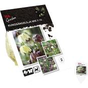 Kungsängslilja Mix x15 ICA Garden