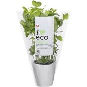 Citronmeliss Ekologisk 1-p KRAV Klass 1 ICA I love eco