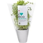 Körvel Ekologisk 1-p KRAV Klass 1 ICA I love eco