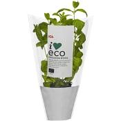 Mynta Ekologisk 1-p KRAV ICA I love eco