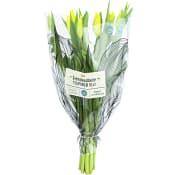 Tulpaner 10-pack gula ICA